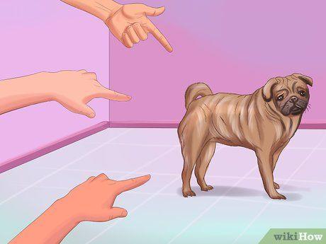 Live With A Pug Dog Pug Puppies Training Your Dog Pugs