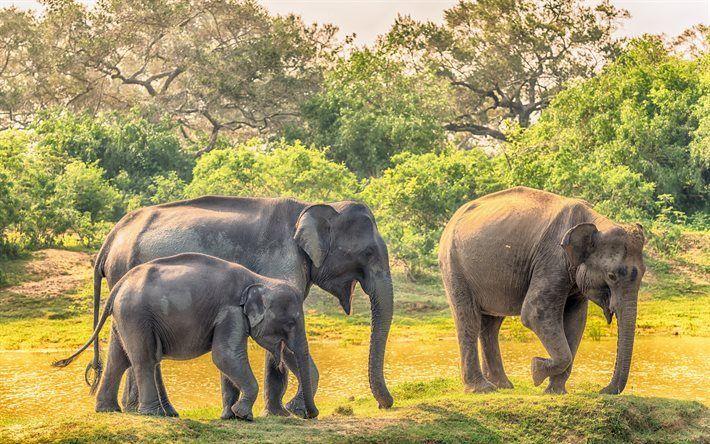 Scarica sfondi Elefanti, Africa, wildlife, safari, famiglia di elefanti