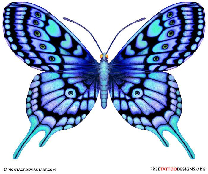 Blue Butterfly Drawing
