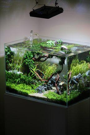 El tanque plantado Coisia vallem por Lauris Karpovs - Premios Aquascape. Pin ... por Aqua piscina Koh