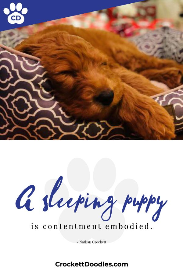 Pin By Rebecca Goff On Funny Animals Dog Lover Quotes Sleeping