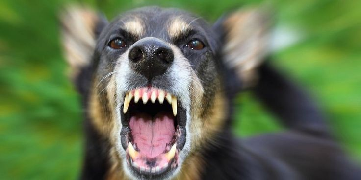 Πύργος: Το δάγκωμα του σκύλου έβγαλε εκκρεμότητες . . .