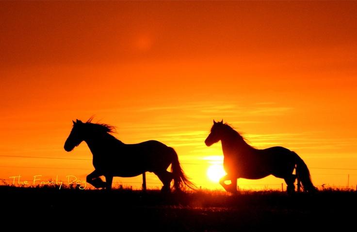 Go horseback riding at sunset. Someday........
