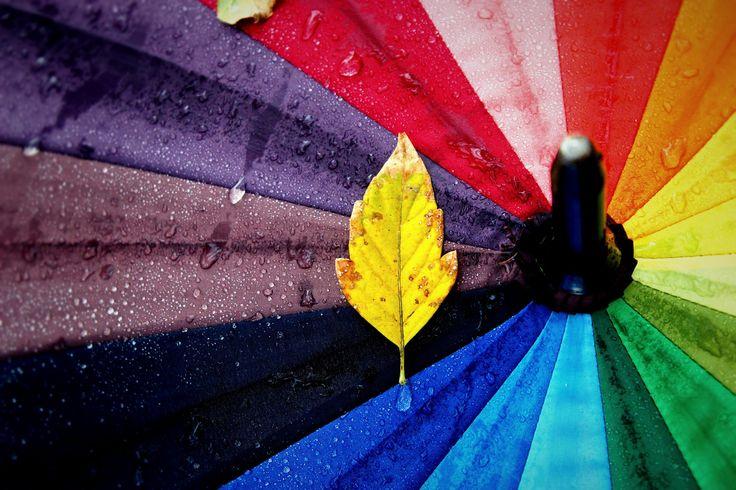 ősz - null