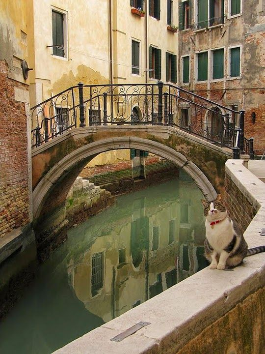 Adorable photo series: cats in Venice, Italy - http://travelling-cats.blogspot.be/2014/04/cats-from-venice-italy.html