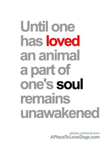 Until one has loved an animal, a part of one's sold remains unawakened <3 Such an amazing a true quote. Anyone can own an animal, it takes a special person to love that animal as though it were a human