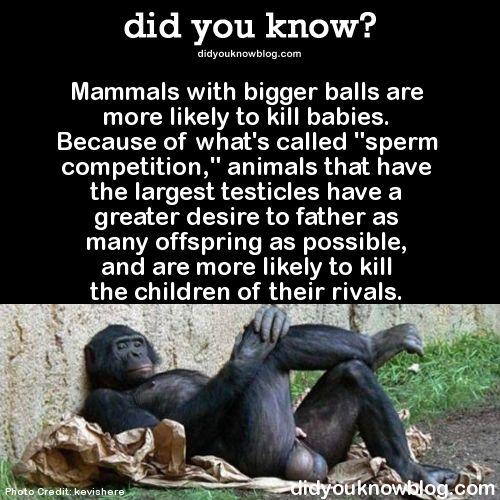 largest-amount-of-sperm-big-balls-older-adult-swinger-porn