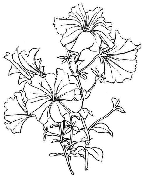 Single Line Drawing Flowers : Petunias cards digi pinterest strichzeichnungen