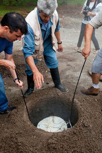 Digging up the cozido a portuguesa, Furnas, Island of Sao Miguel, Archipelago of the Azores, Portugal, Europe (Andre Vicente Goncalves)