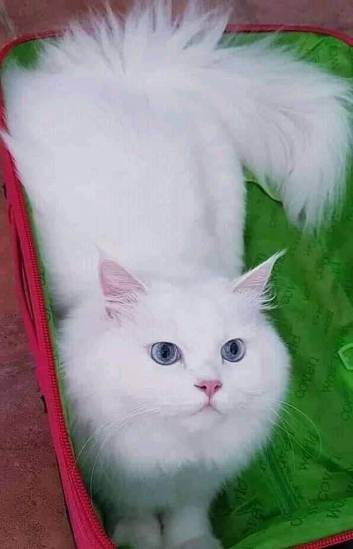 Pin By Svetik On Koshki In 2020 I Love Cats Cats And Kittens Cats