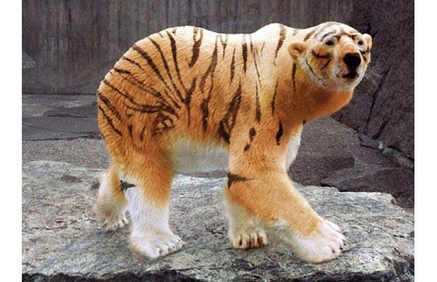 Internet spawns strange animal morphs | Strange animals ...