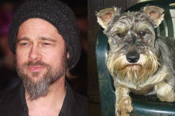 Brad Pitt Dog Doppelganger