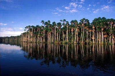 (tal vez) Tambopata Reserve, Peru.