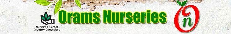 Asparagus meyeri: | Orams Nurseries Rockhampton | Wholesale and Retail Nurserymen