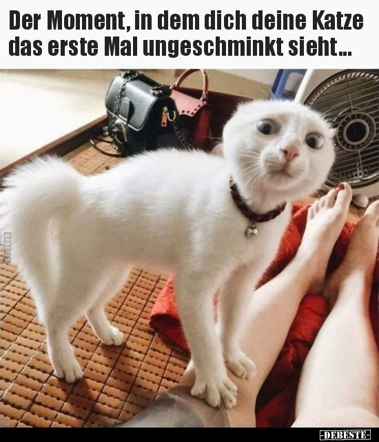Der Moment, in dem dich deine Katze das erste Mal..