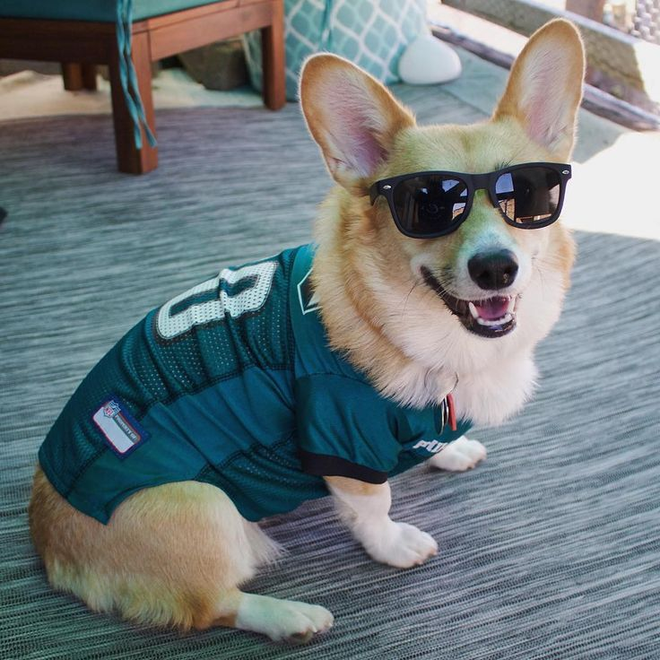 @philadelphiaeagles fans be like... | Good luck in tonights game against Dallas!  #flyeaglesfly #gobirds [: @corgipippa ] #visitphilly #philadelphia #philly