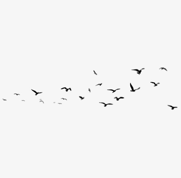 Birds Png And Clipart Clip Art Photoshop Elements Bird Sketch