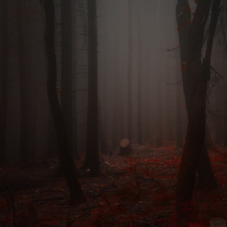 Photo Gothic underworld of the forest