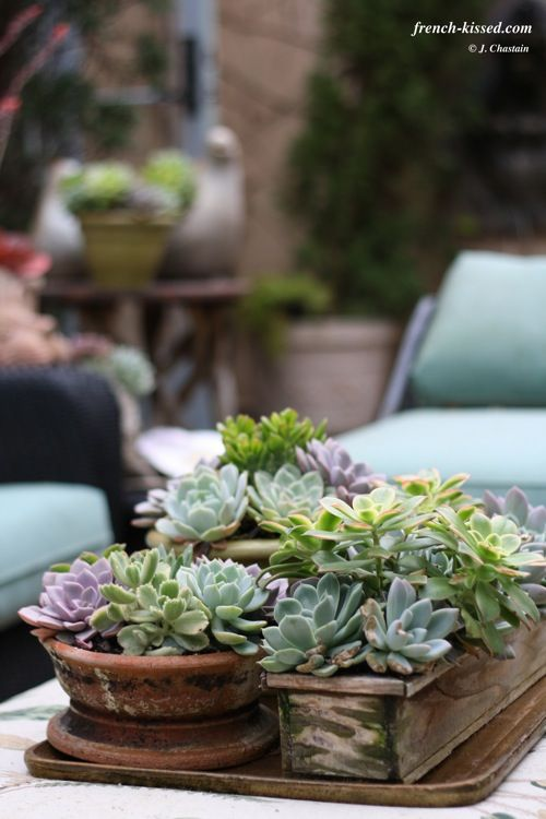 A cluster of different shape planters bunched together to make a fabulous center piece.