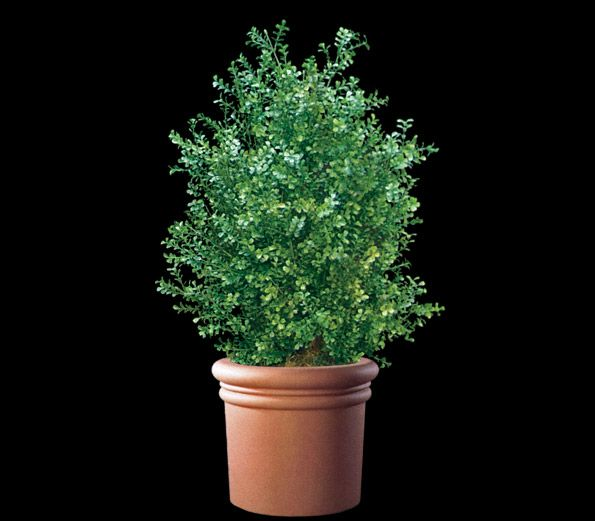 Artificial Boxwood plant by Commercial Silk Int'l is made for both indoor and outdoor commercial applications. Boxwood bushes and plants are hand crafted from fire retardant and UV resistant artificial foliage.