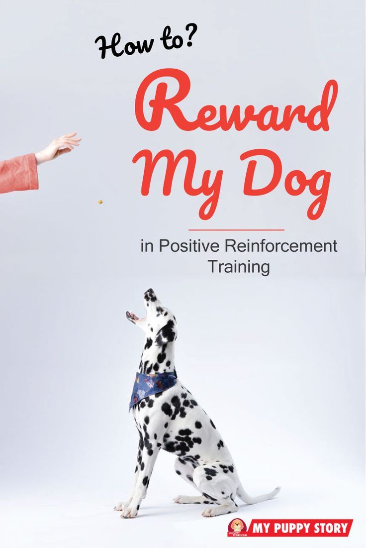 How To Reward Your Dog In Positive Reinforcement Training Dog