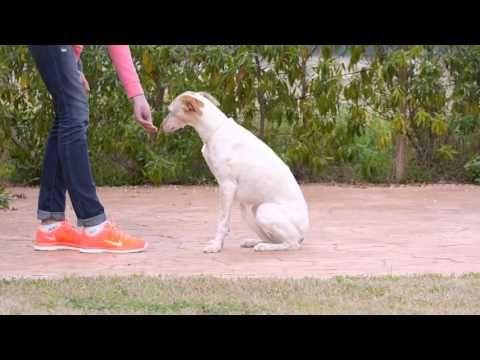"""Dein Hund hat eine Hüftdysplasie - der """"Steh Sitz Transfer"""" ist eine wirkungsvolle Übung - YouTube"""