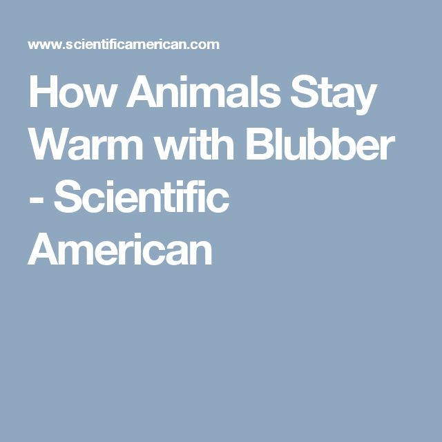 How Animals Stay Warm with Blubber - Scientific American