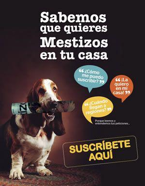 Mascotas, Revista, Cuidado animal, La primera revista gratuita sobre fauna