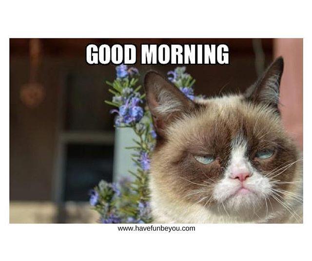 Good Morning Www Havefunbeyou Com Goodmorning Coffee Possibilities Wifemomboss Entrepeneur Havefunbeyou Grumpy Cat Funny Animals Cats