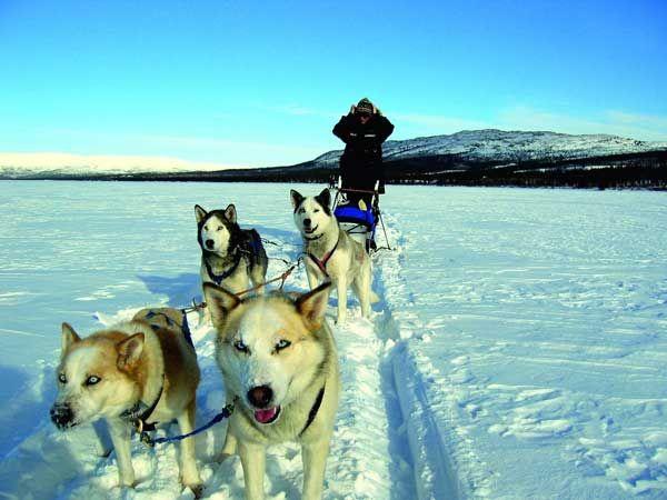 Mit dem Hundeschlitten durch die Wildnis Kanadas husky-kanada-yukon