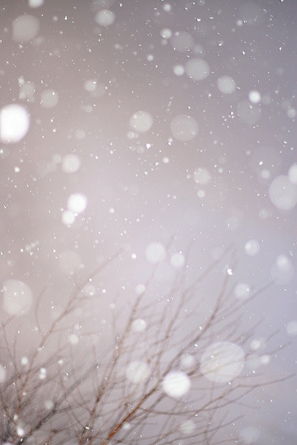Snow.: Iphone Wallpapers, Snow Fall, Winter Time, Gentle Fall, Winter Wonderland, February Challenges, Let It Snow, Fall Snow