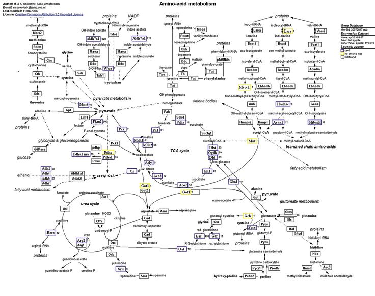 Amino Acid Chart