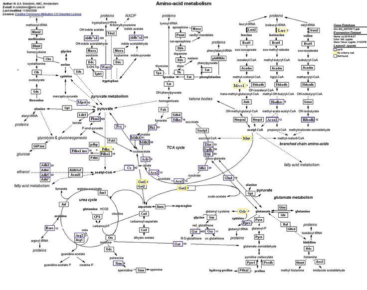 amino acid therapy chart - Google Search Mind Matters Pinterest - amino acid chart