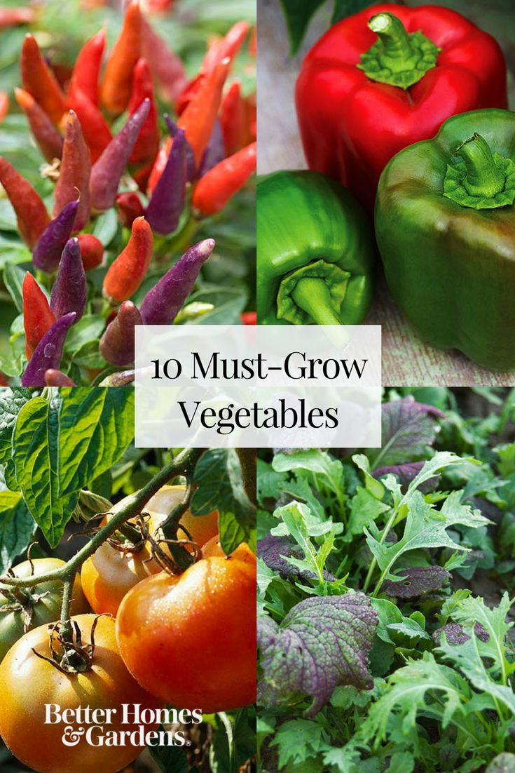 Whether you're a beginner or expert gardener, you'll love this list of must-grow vegetable plants. We're making vegetable gardening easier by sharing our best gardening tips for what, where, and how to plant a garden filled with fresh produce. #growvegetables #gardening #vegetablegarden