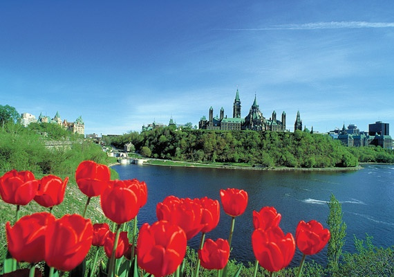 Tulips and Parliament Hill in Ottawa, Canada. For more information on the Tulip Festival visit http://www.ottawatourism.ca/en/visitors/top-attractions/canadian-tulip-festival