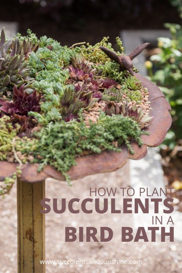 This bird bath filled with succulents is gorgeous! I want to do this in my garden