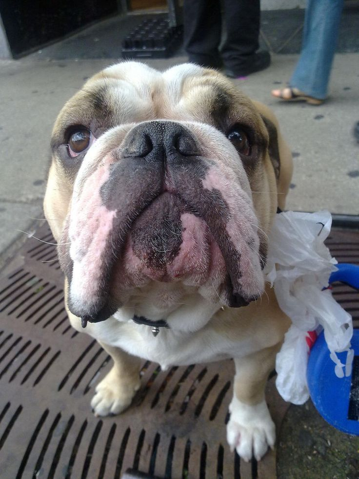 Seis ideas divertidas para recoger los excrementos del perro Los restos caninos pueden retirarse con paletas, bolsas biodegradables guardadas en divertidos dispensadores y hasta con un cómodo aspirador diseñado para este uso