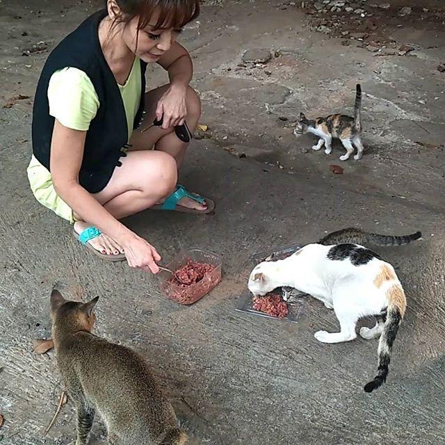 Masih Ingat Ttg Betina Calico Yg Kaki Depannya Buntung Kucing Induk Malang Beserta 2 Kitten Masih Ingat Ttg Betina Calico Forex Strategy Animals Kangaroo