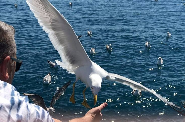 CHARTER IN BARCA A VELA PER WEEKEND IN ISTRIA #charter #charterbarcaavela #barcaavelainistria
