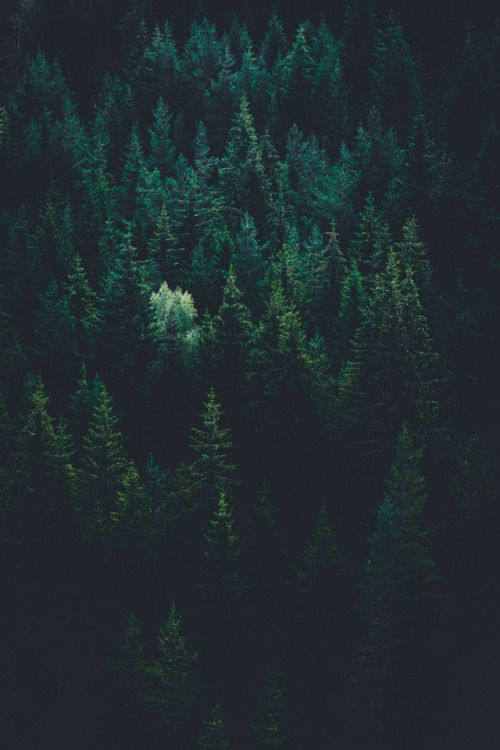 Lvndscpe Forest By Evgeni Evgeniev Wallpapers In 2019 Forest