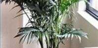 How to Kill Gnats in Houseplants | eHow...need to do this today. Tired of these damn gnats
