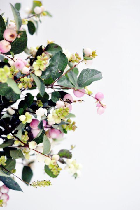 snow-berries
