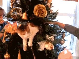 El proyecto de el Camaleón - Google+ - ese gato no quiere que toquen su arbol