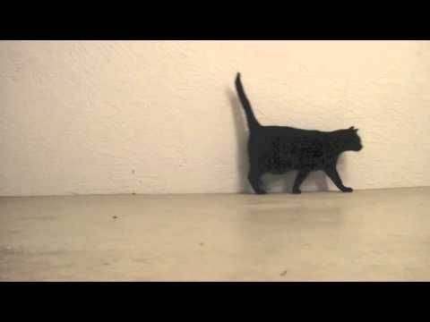 The gait of a cat walking to the right side. Right rear, right front, left rear, left front. In normal speed and slow motion. Another video is http://youtu.b...