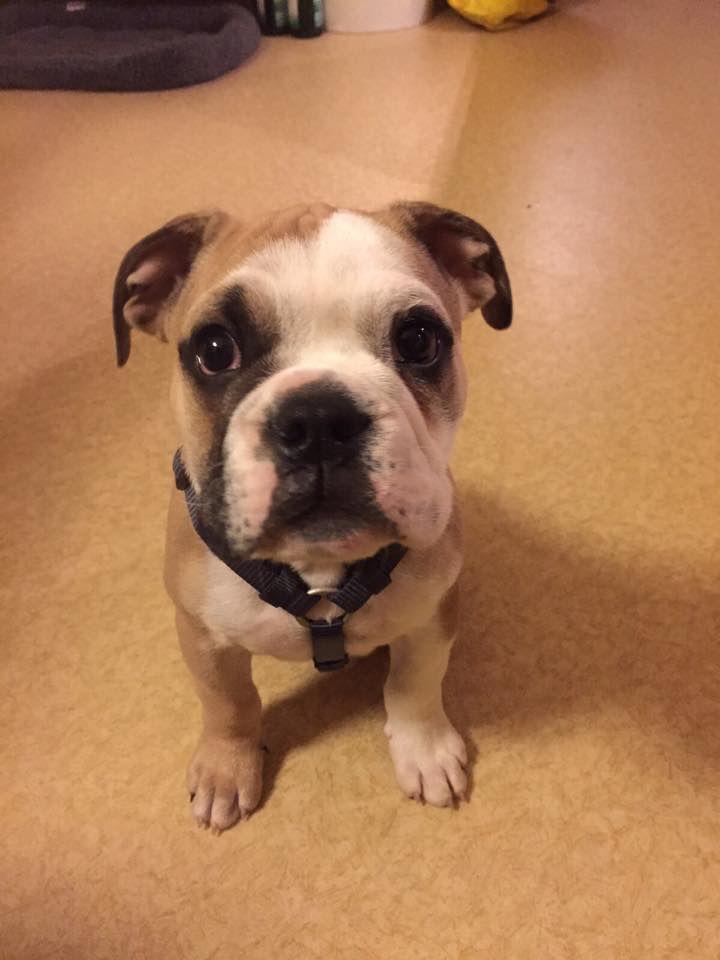 17 best Mix Breed Dog images on Pinterest | Dog breeds, Species of ...