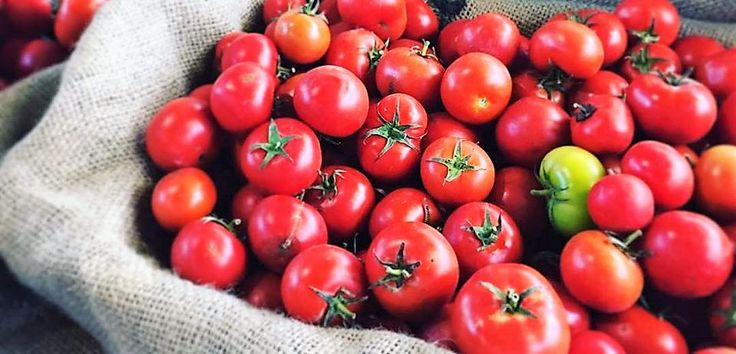 Summer tomatoes are a thing of beauty. Here's how good they are for you, and how to use them.