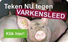 Het roer om: VAIR diervriendelijkere varkenshouderij | Compassion in World Farming Nederland