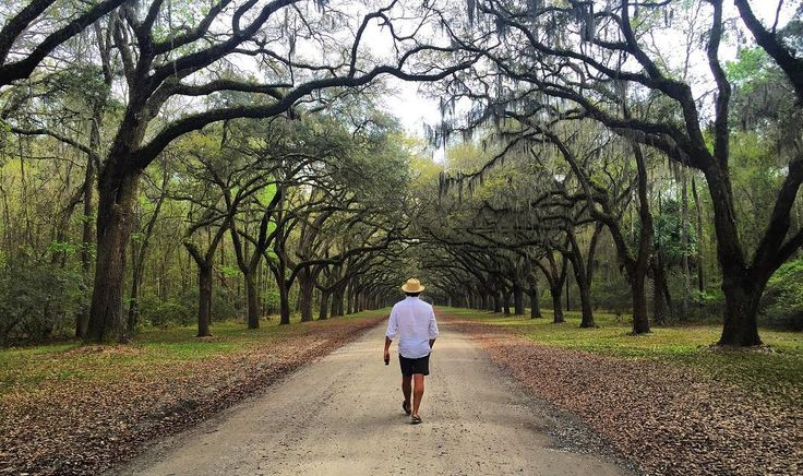 cap'n @aricsqueen walks the stunning 1.5 mile oak avenue of Wormsloe - a stretch you'll recognize from where Forrest broke out of his braces.  #themaritimelemonadestand #sailing #adventure #aricsqueen #odyssey #adventure #boatlife #travel #tinyhomes #sailboat #ocean #outdoors #wanderlust #boat #eastcoast #instatravel #travelgram #traveling #instagood #instaboat #saltlife #nature #savannah #wormsloe #spanishmoss #oak #forrestgump #hotlegs by themaritimelemonadestand