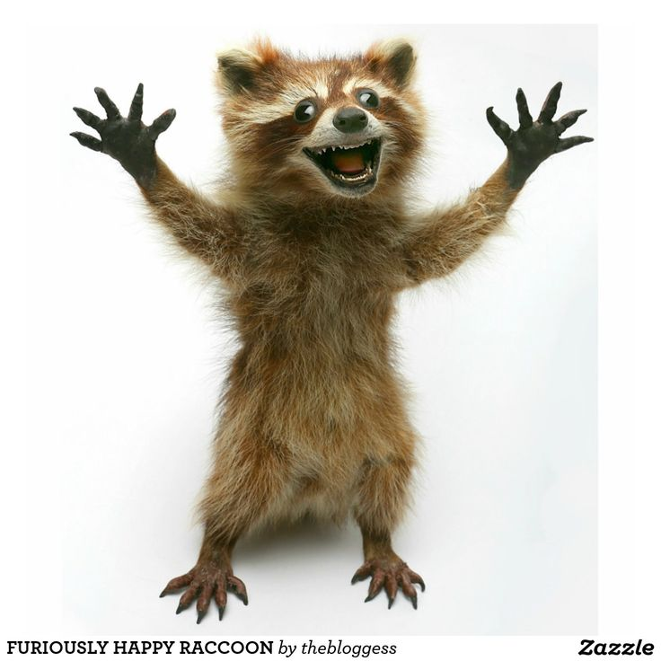 FURIOUSLY HAPPY RACCOON STANDING PHOTO SCULPTURE - from The Bloggess :)