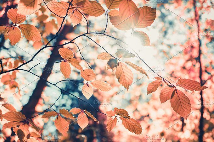 Red autumn leaves and sunlight background by Volodymyr.Goinyk on @creativemarket